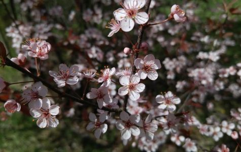 Online Exclusive: Activities to do during spring
